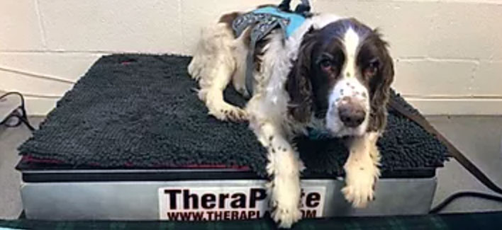 Canine TheraPlate