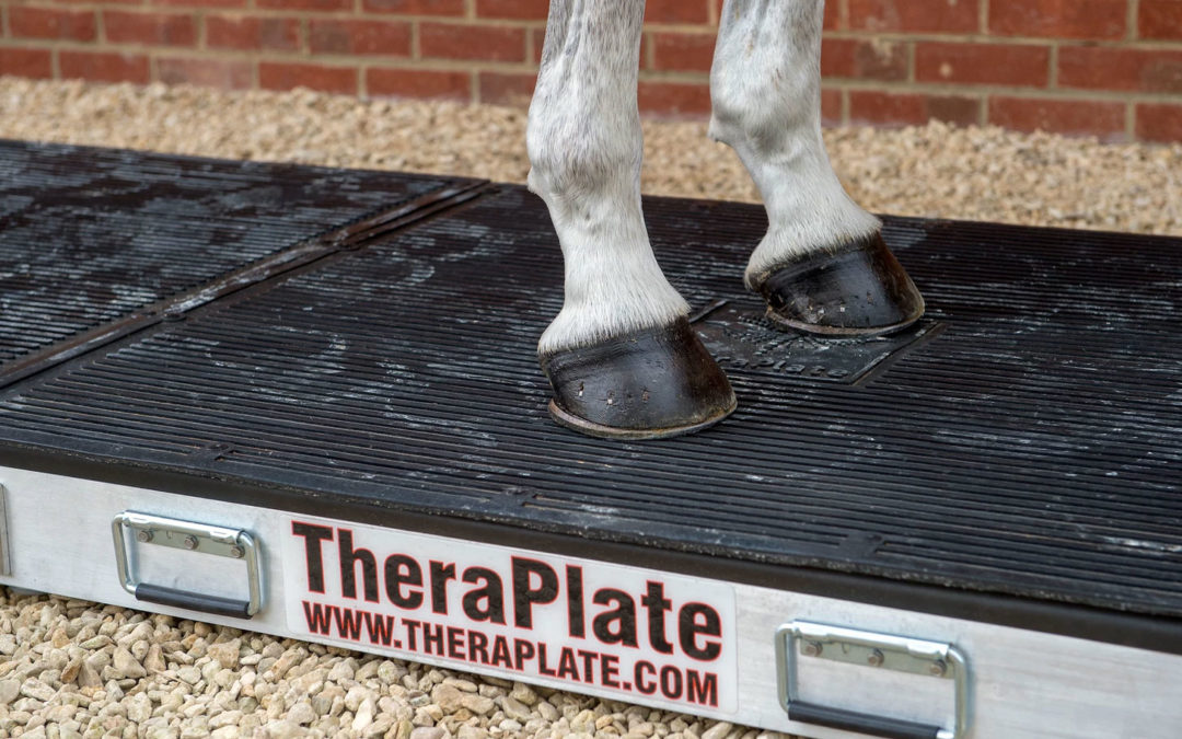 TheraPlate treatment horse