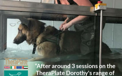 Buxton K9 Hydrotherapy's TheraPlate Joy