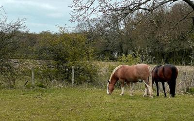 Equine Obesity – Should We Be Concerned?