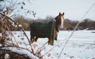 Winter is coming… here are 4 ways for horse owners to prepare